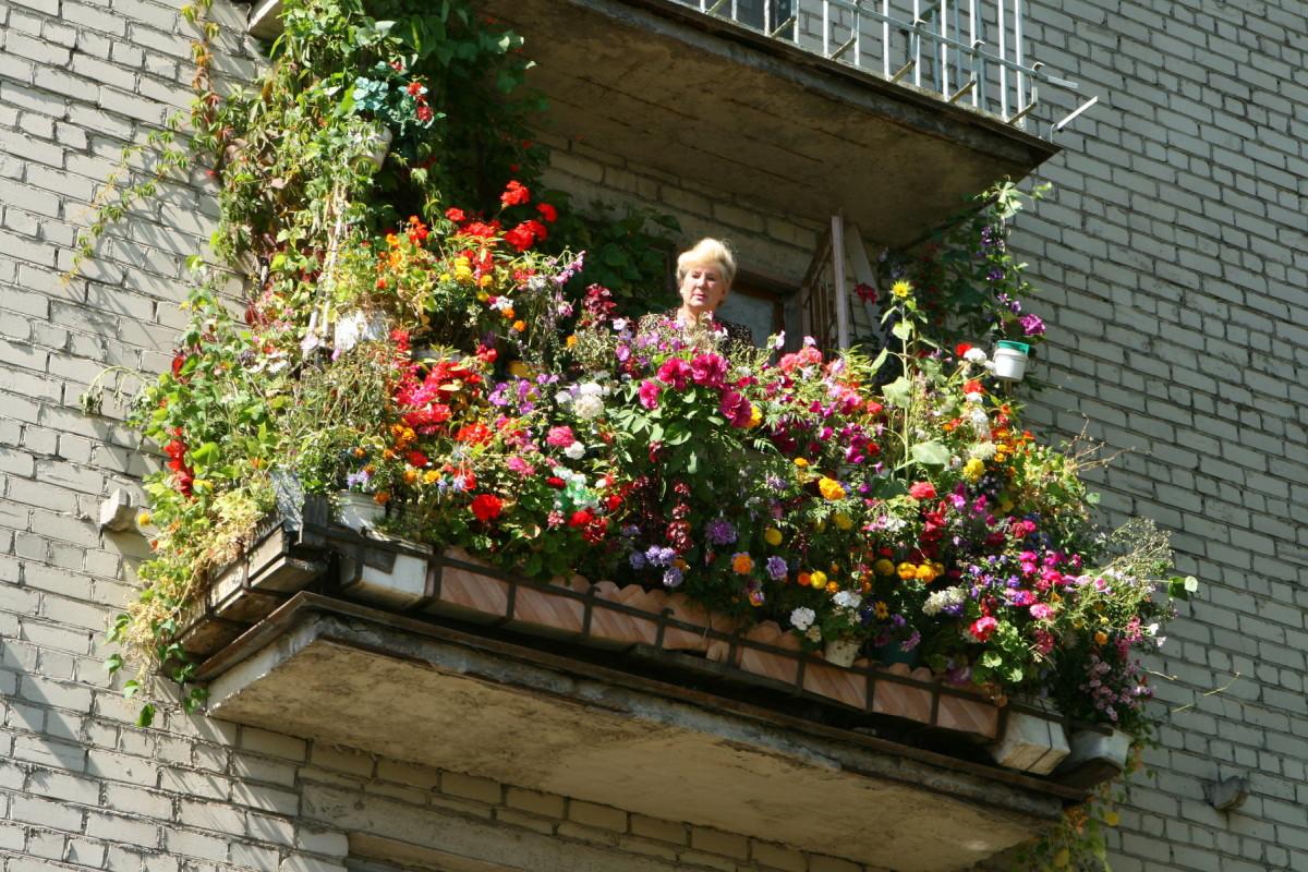 Cvijeće na balkonu: 75 primjera fotografija