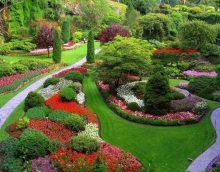 variante de l'utilisation de belles plantes dans l'aménagement paysager donnant photo