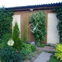 Ēku vertikālā dārzkopība