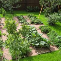 Vieta dārzeņu audzēšanai personīgajā zemes gabalā