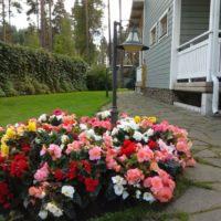 Puķu dobe ar košiem ziediem lauku mājas lieveņa priekšā