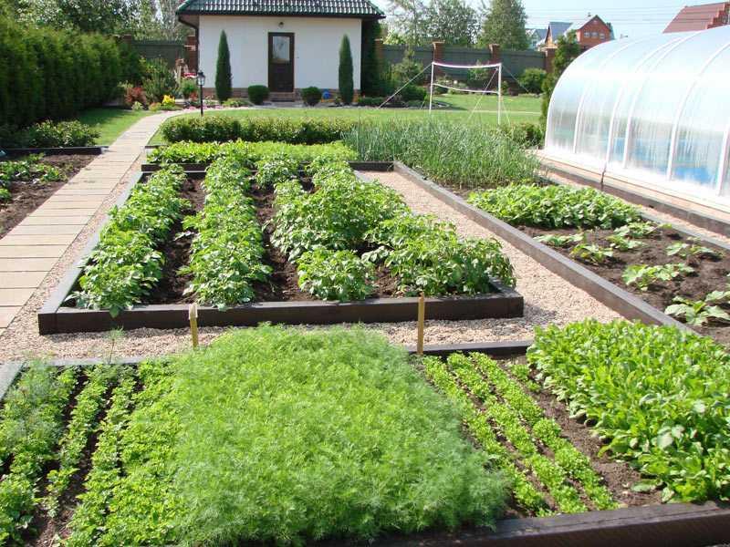 Skaists dārzeņu gultas dizains vasarnīcā