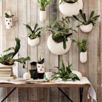 Siena ar dzīviem augiem baltos puķu podos