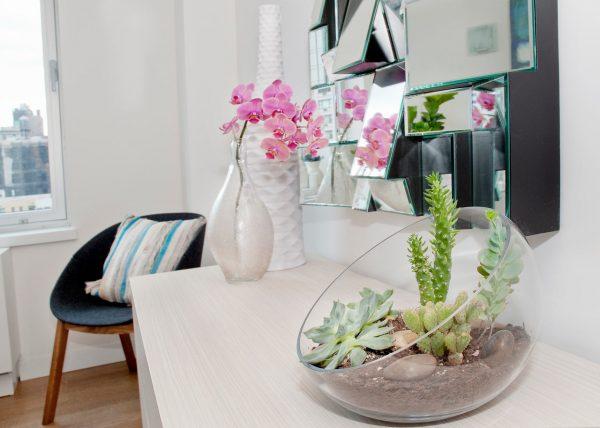 Cette variété de cactus semble inhabituelle et est parfaite pour les intérieurs modernes.