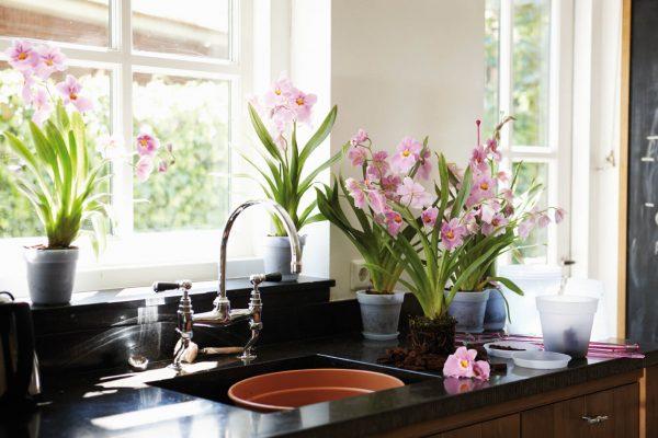 Les plantes d'intérieur vont décorer l'intérieur de n'importe quelle pièce. Très cool, ils cherchent à l'intérieur de la cuisine