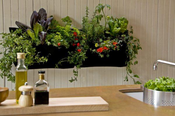 Lors du choix des plantes dans la cuisine, considérez leurs caractéristiques