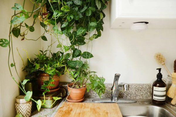Ne placez pas de fleurs près de l'évier. Les produits chimiques ménagers nuisent aux plantes