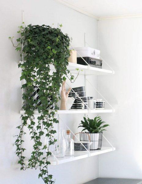Les plantes grimpantes ont l'air inhabituelles et intéressantes dans la cuisine