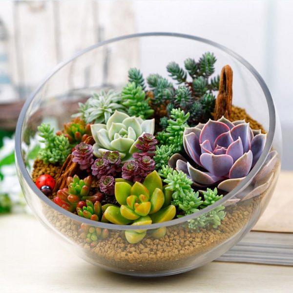 Un tel mini-jardin va décorer votre cuisine