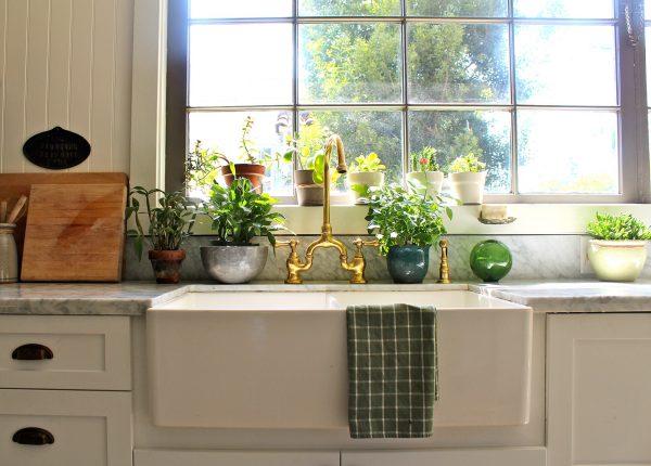 Sur les fenêtres qui font face au sud, il vaut mieux avoir des plantes sans prétention.