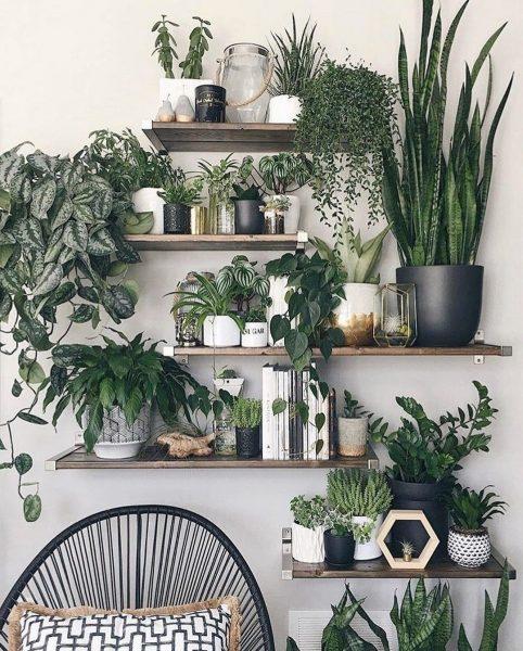 plantes d'intérieur appropriées pour une cuisine avec des fenêtres faisant face au nord ou à l'ouest.