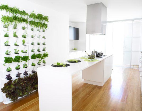 Ces plantes rafraîchissent vraiment le look de la cuisine et vous apaisent après une dure journée.