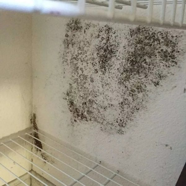 But not only is the mold difficult to wash, the smell from it is much more difficult to remove.